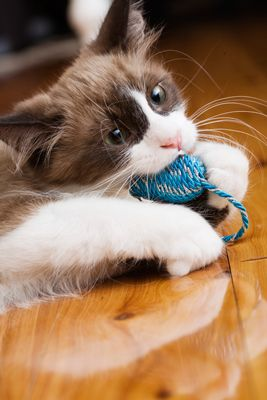 What Can I Do If My Cat Isn T Getting Enough Exercise Cat Behavior Kittens Puppies Kitten Care