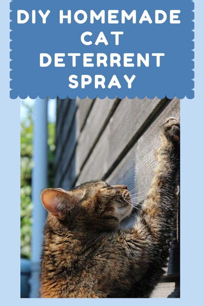 DIY Homemade Cat Deterrent Spray Enough With The
