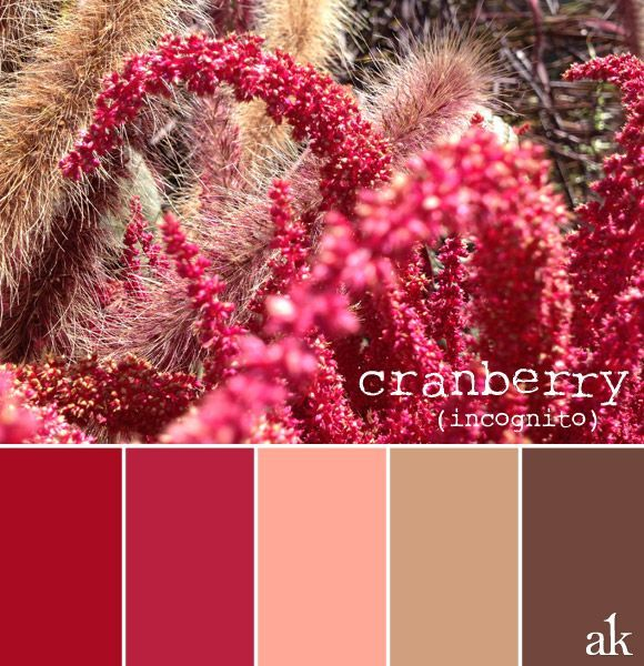 a cranberry-inspired color palette // cranberry, pink, tan, brown ...