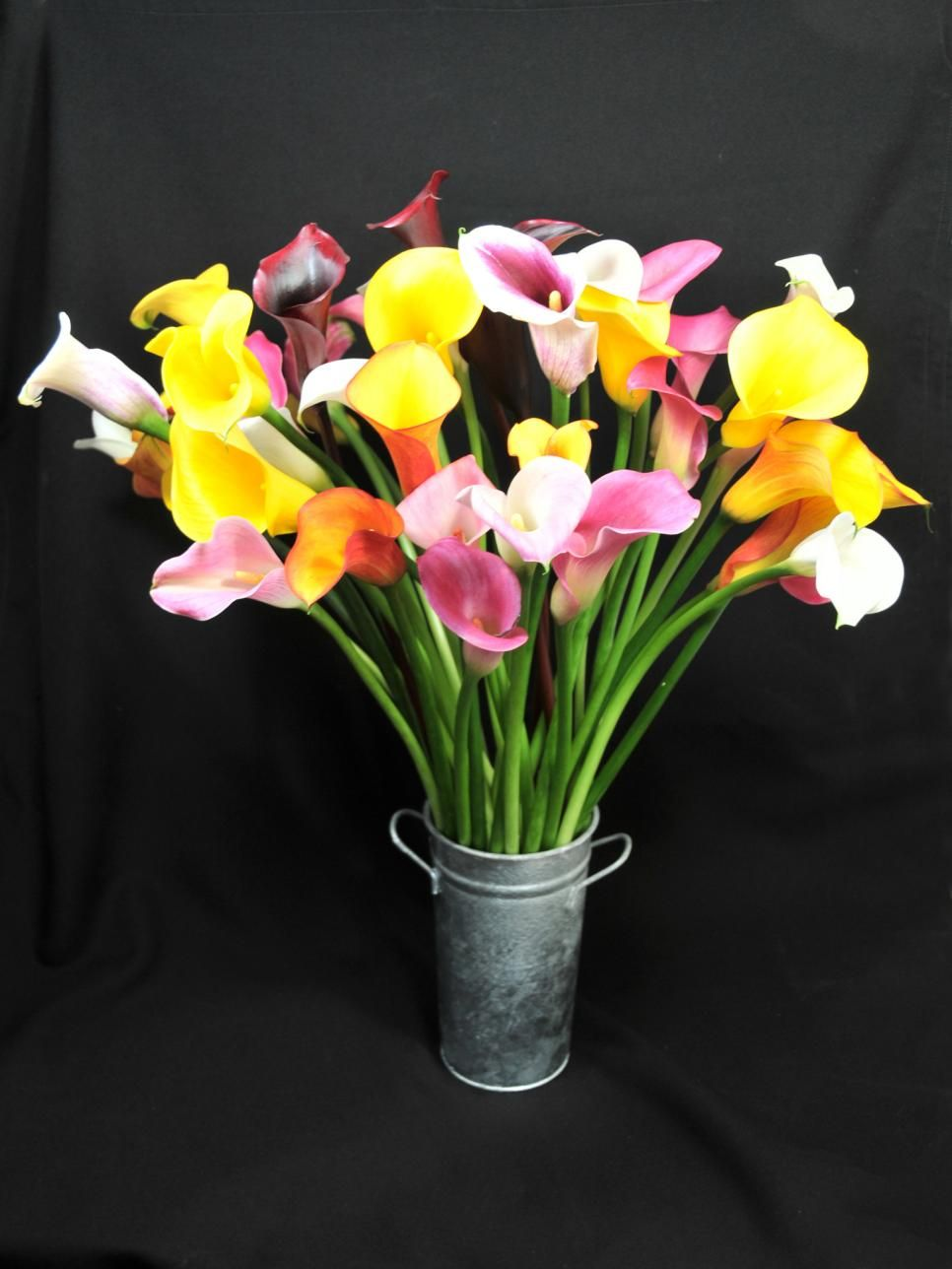 Calla lily varieties calla lilies stargazer and white gardens calla lily varieties izmirmasajfo