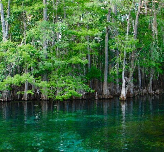 Florida State Parks Manatee Springs Florida State Parks State Parks Burgess Falls