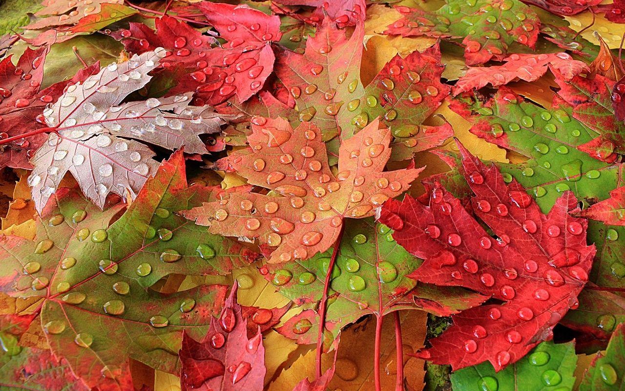 доска картинки с красивыми листьями часто приглашали