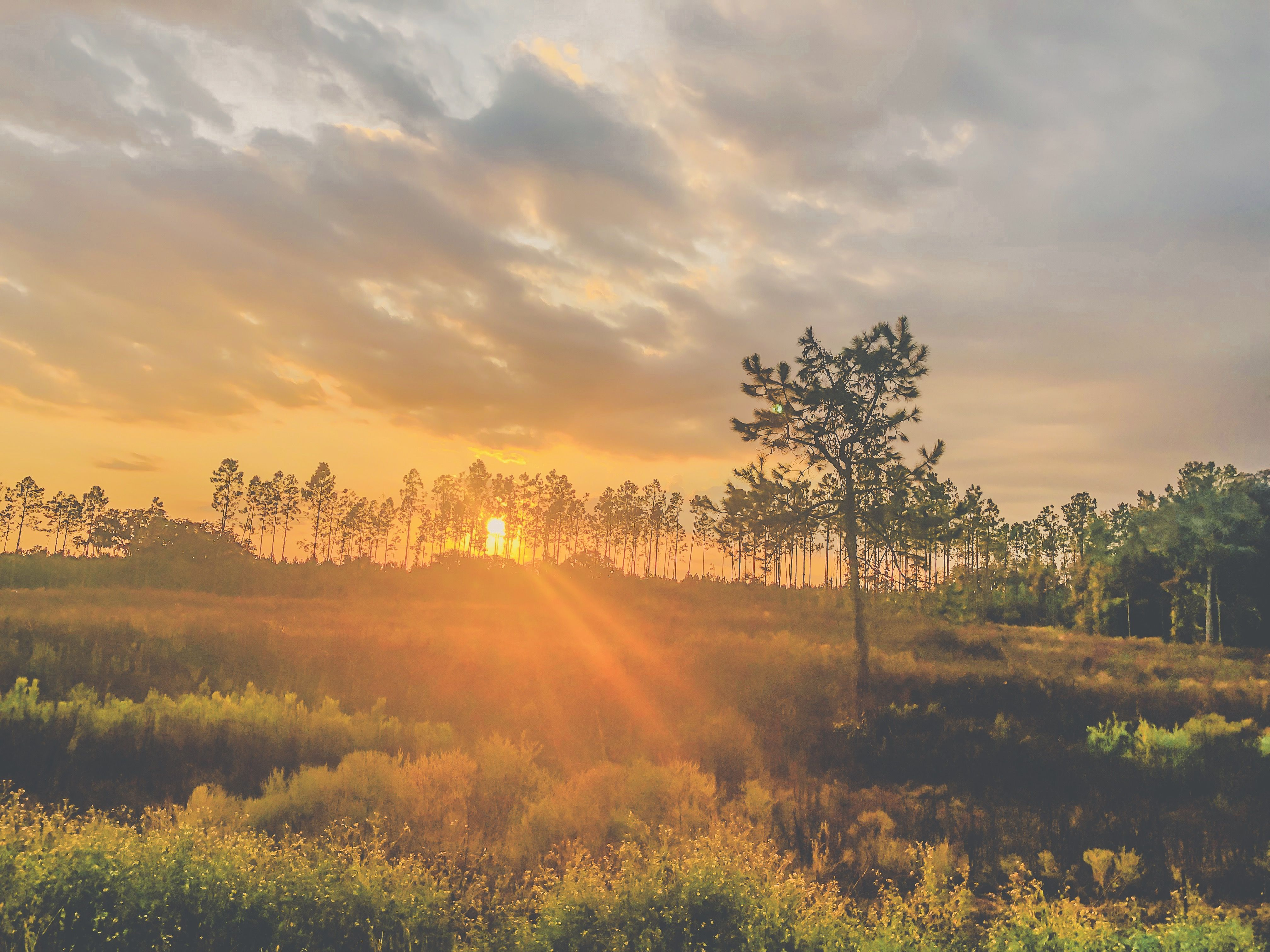 #sunset #photography #pinetree #sunsetphotography #sun #landscape #beautifulplaces #florida #floridaliving