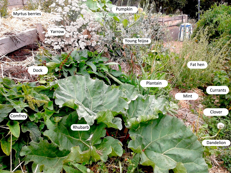 garden design slope urban edible forest gardens good life permaculture