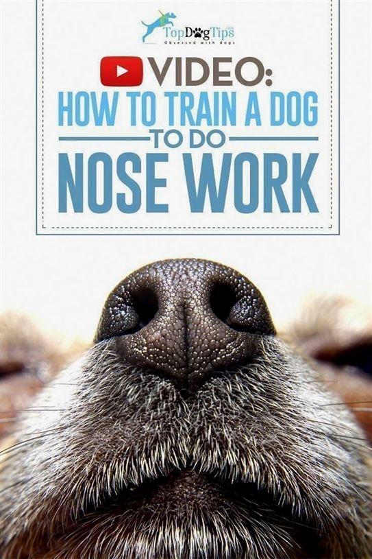 Dog Training Duluth Mn Dog Training Pads Xl Dog Training 48442