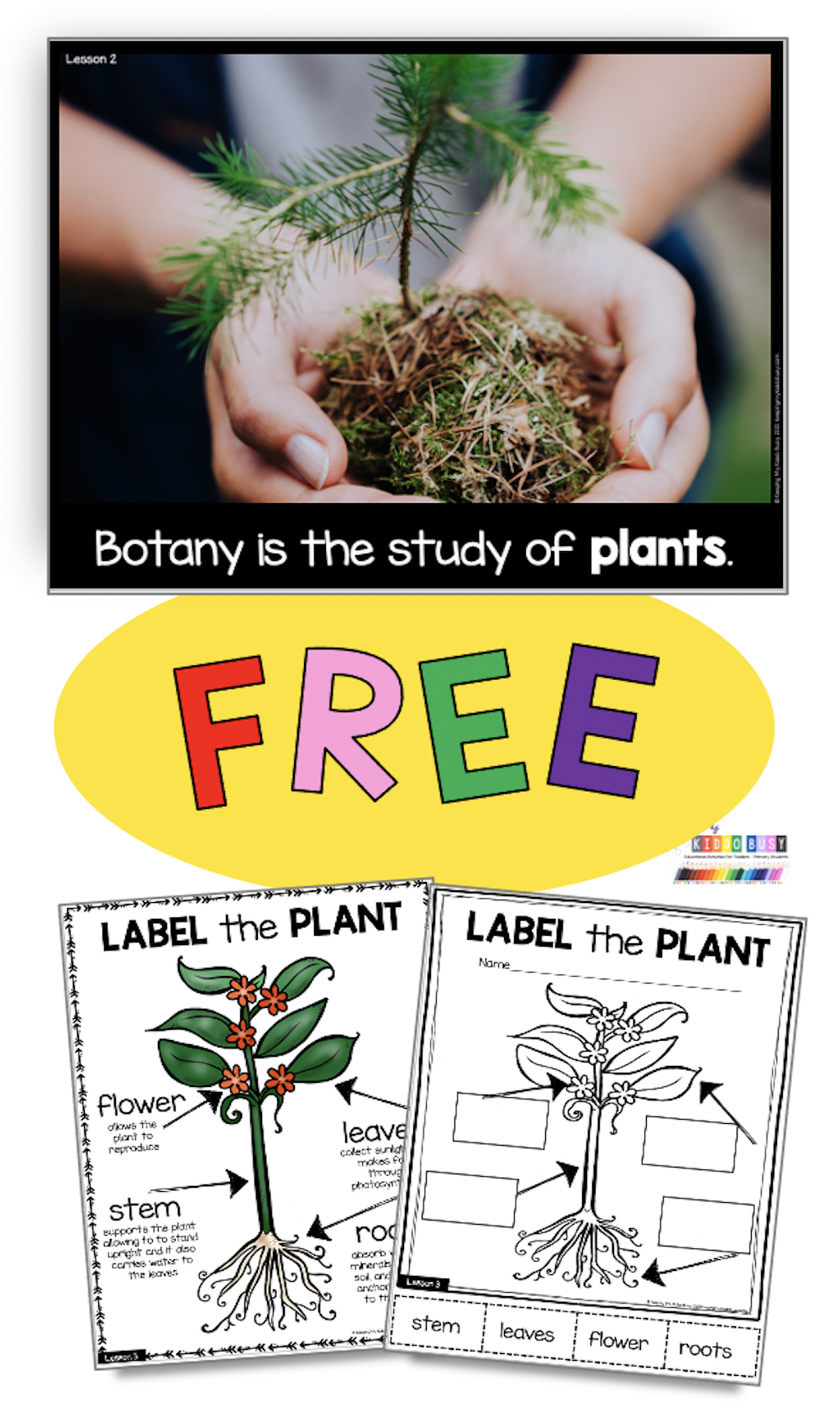 All About Plants Science Unit Free Activity Keeping My Kiddo Busy In 2021 Plant Science Plant Life Cycle Science Units [ 1700 x 1000 Pixel ]