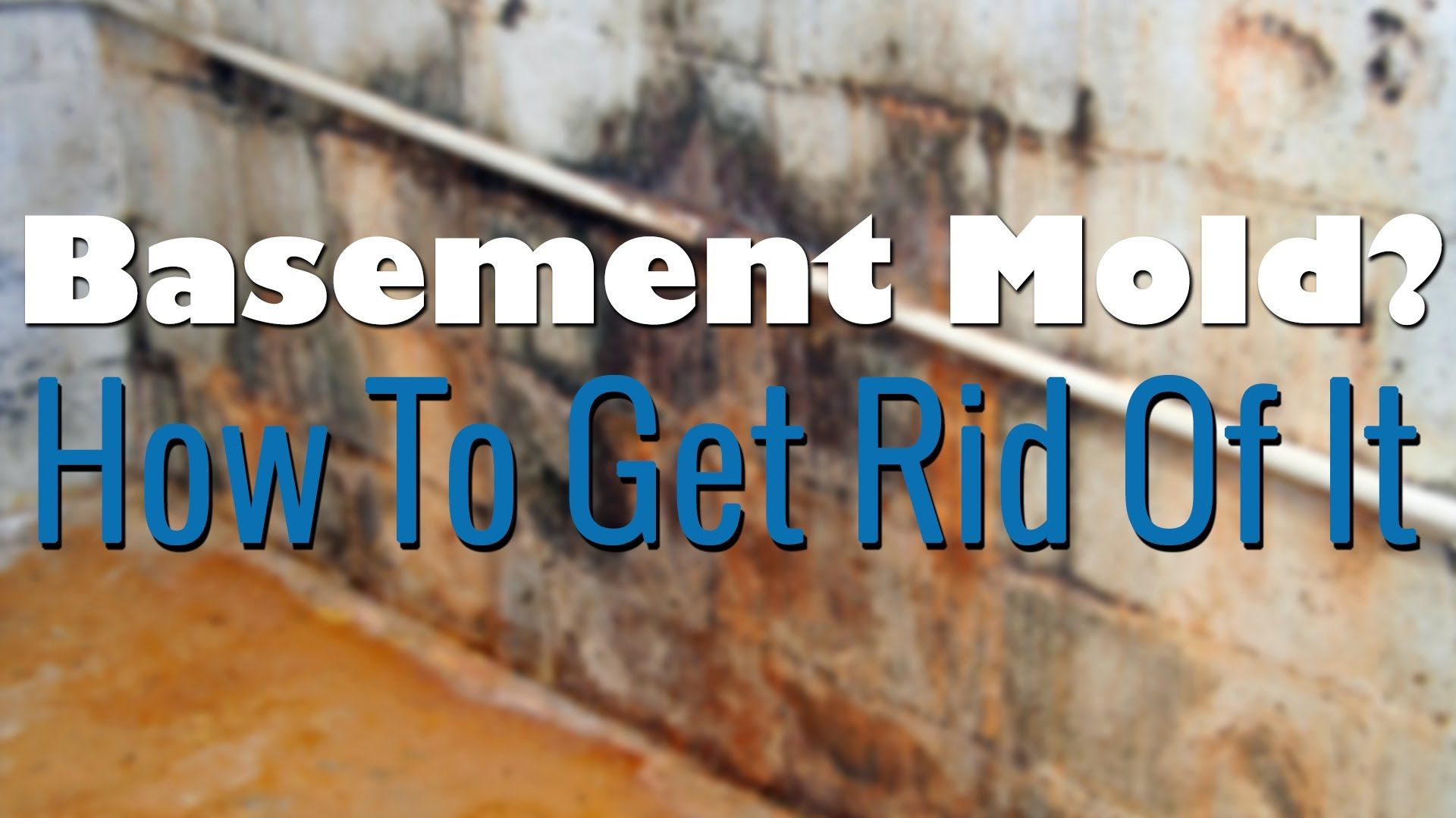 3 Proven Steps To Get Rid Of Mold In Your Basement Get Rid Of Mold Mold In Basement Mold Remover