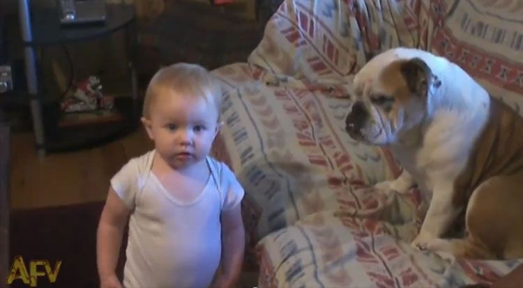 Baby Gets Into An Argument With A Bulldog Video Baby Dogs