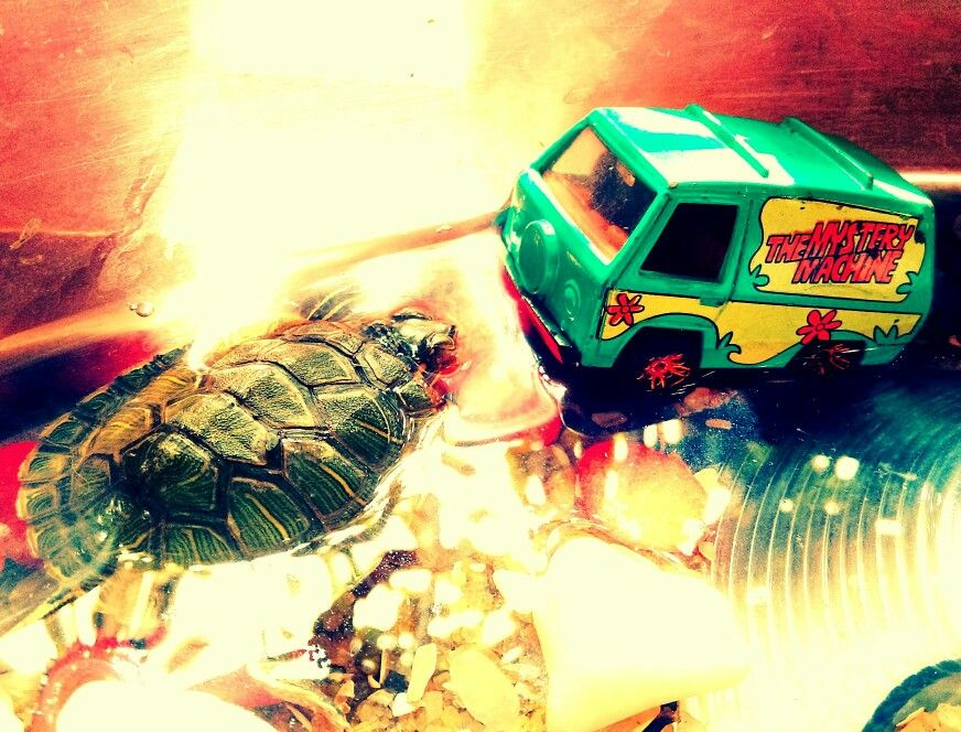The Mystery Machine at Mysterious Places - Part 23 (Mega Reptile Momentum)  #art #scoobydoo #mysterymachine #photography #cartoons #turtle