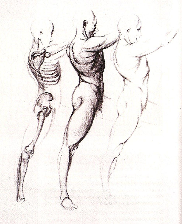 Draw Figures Drawing Body Pinterest Human Body Body