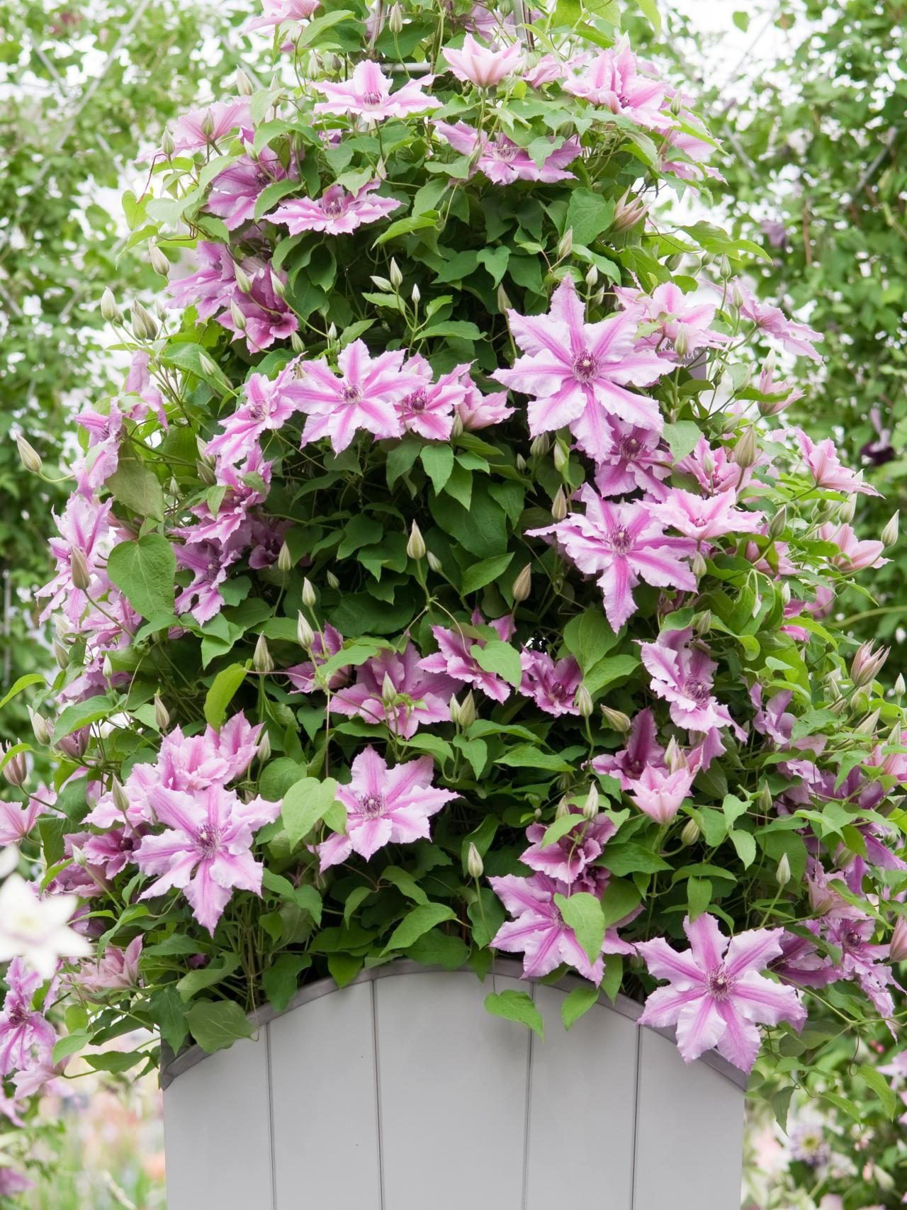 Trellis For Clematis Ideas Part - 37: 30 Small Garden Ideas U0026 Designs For Small Spaces