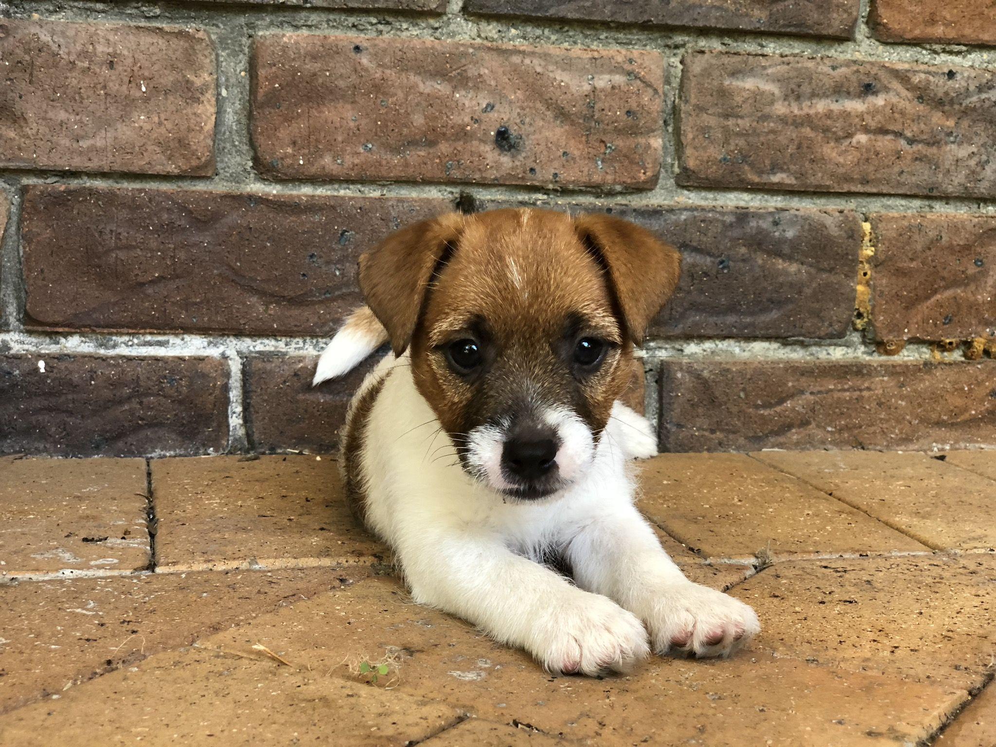 Pup By Lisa Oszajca On Awwww Animals Animals Corgi