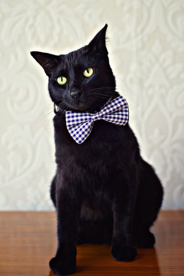 Bowknot Pattern Dog Cat Pet Bow Tie Necktie Collar Accessory Sale Price Reviews Cat Bowtie Collar Cats Cat Wedding