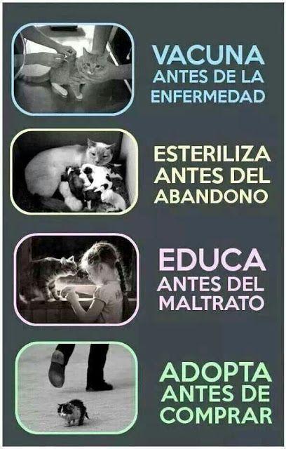 Animal Friend: EDUCACION ANIMAL