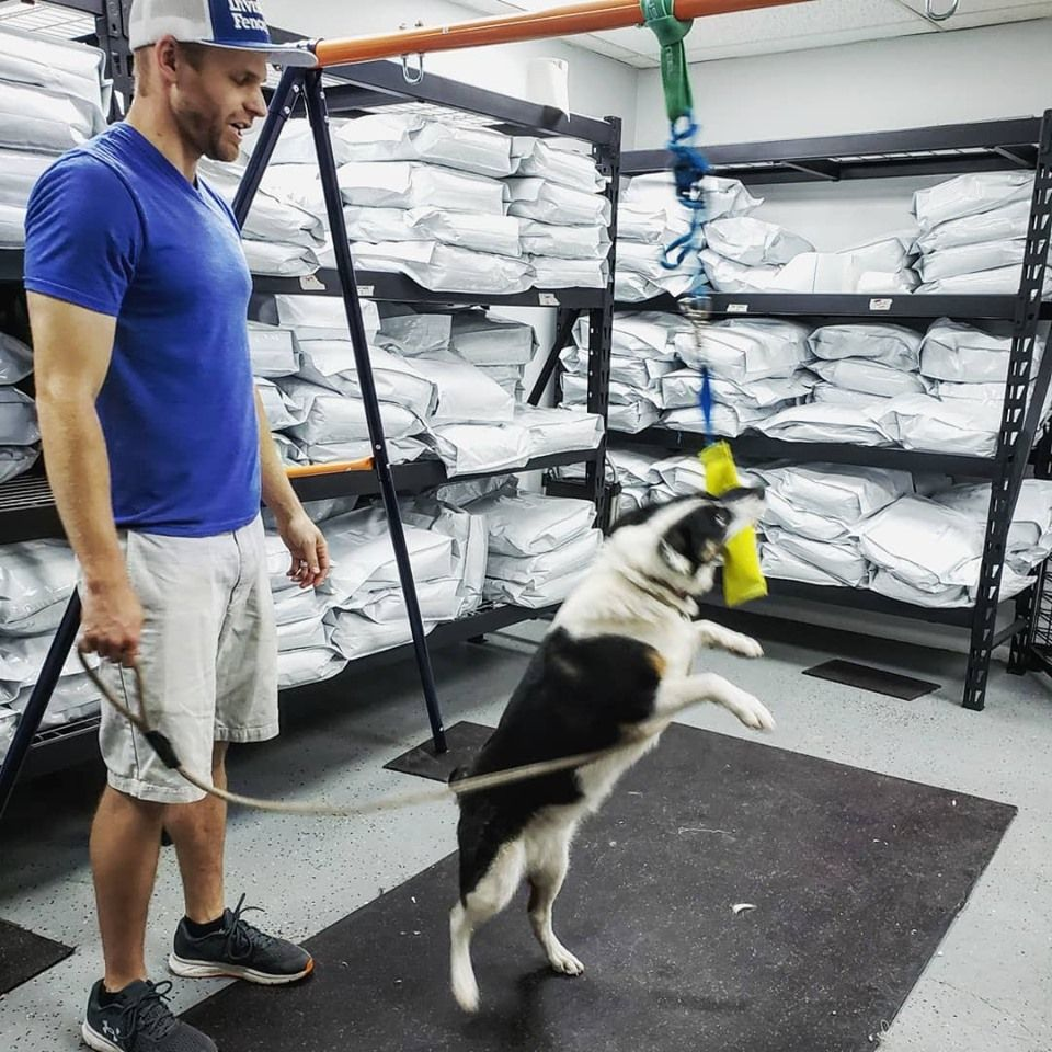 Dog Training Classes in Slc Puppy training, Dog training