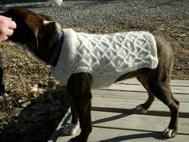 Awesome Knitting Pattern Dog Jumper Images Easy Scarf Knitting