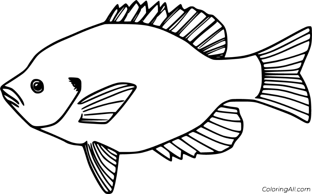 11 Free Printable Bluegill Coloring Pages In Vector Format Easy To Print From Any Device And Automatic Coloring Pages Fish Coloring Page Sports Coloring Pages