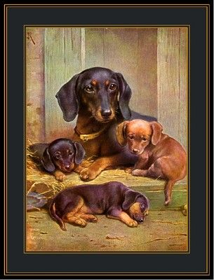Vintage English Print Dachshund Dog Puppies Art Picture | eBay