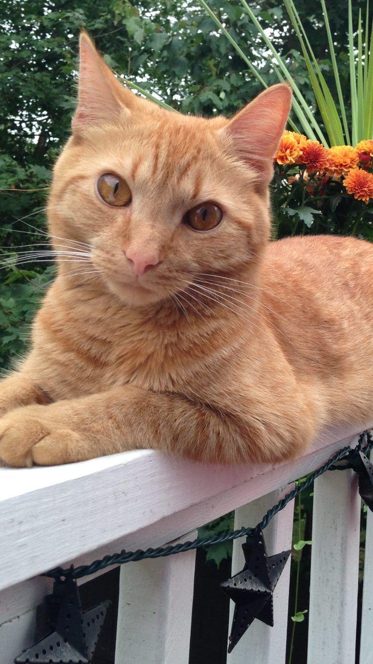 Watertown Ct Municipal Animal Shelter Orange Https Www Facebook