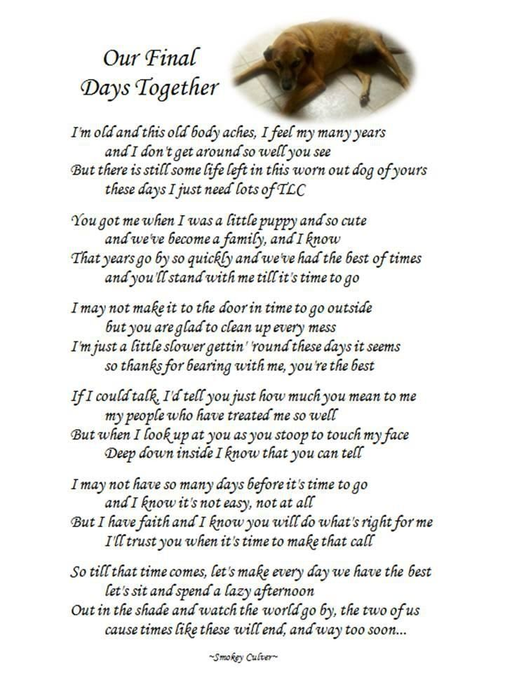 Pin by Lisa Mueller on Doggies | Dog poems, Dogs, Pet loss grief