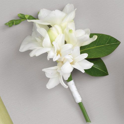 Ws002 31g 500500 a rose is a rose is a rose pinterest ws002 31g 500500 orchid boutonnieregroom boutonniereboutonniereswhite mightylinksfo Image collections