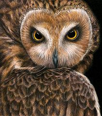 Owls Featured Images - Look into my Eyes  by Pat Erickson