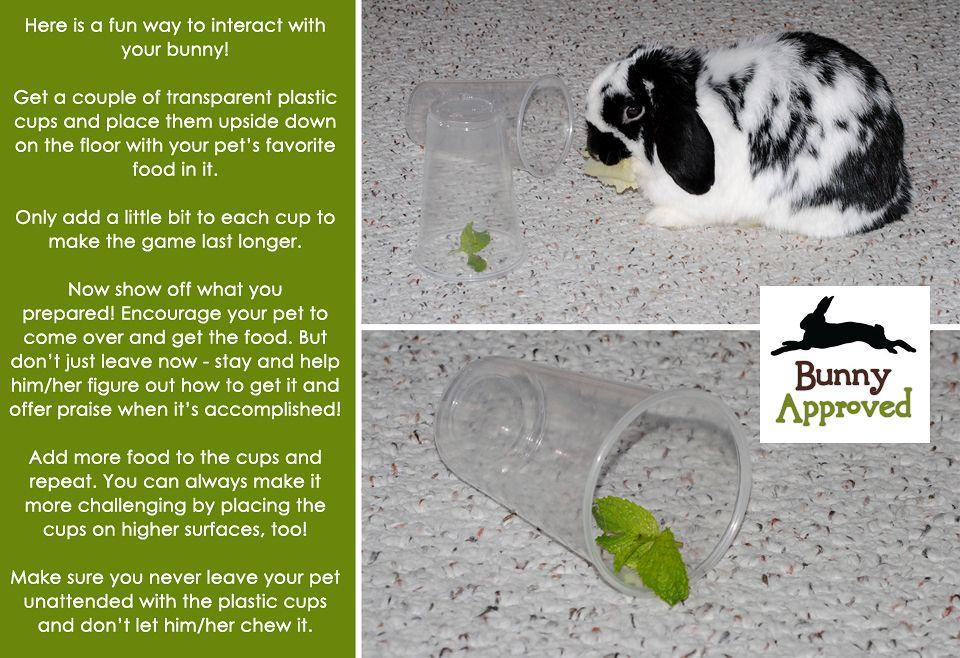 En simpelt lille leg:  Tag to gennemsigtige plastkrus og sæt dem på hovedet. Læg en godbid, der dufter godt, under kruset og lad din kanin finde ud af hvordan den når frem til godbidden.  http://www.kaninhaandbogen.dk #kaniner #huskaniner