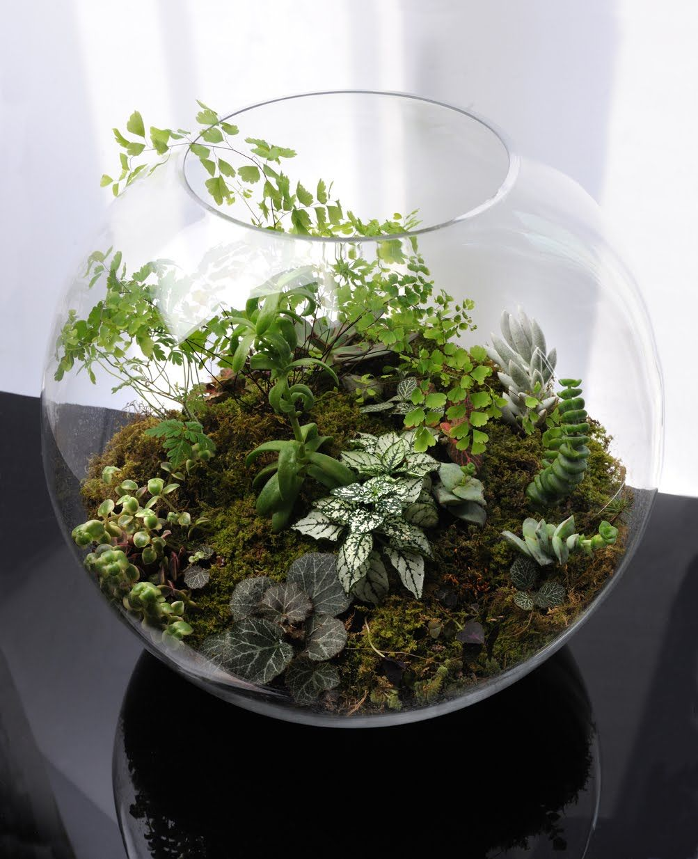 id es pour terrarium un si petit jardin pinterest terrarium plantes et id e. Black Bedroom Furniture Sets. Home Design Ideas