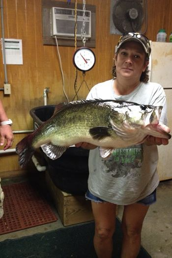 Linda Smith Of Hemphiill Tx Caught This 11 77 Lb Fish On October 18 2014 And Weighed It In At Fin And Feather Resort C Lake Fishing Toledo Bend Bass Fishing