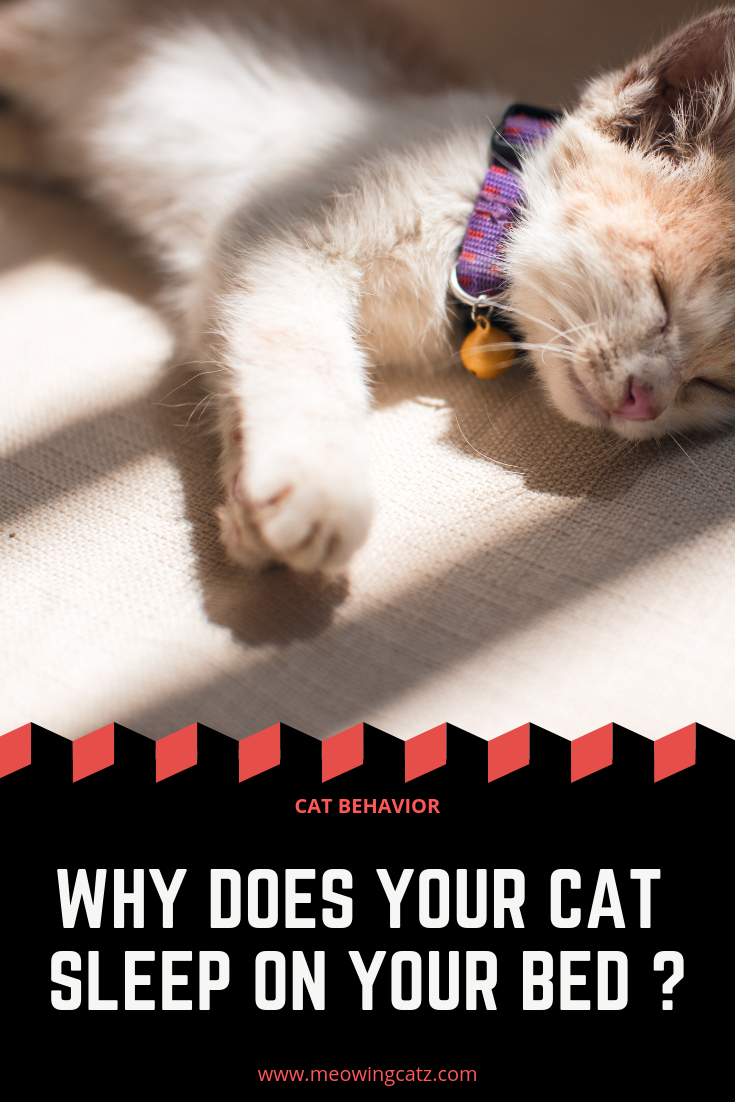 Why does your cat sleep on your bed ? (With images) Cat