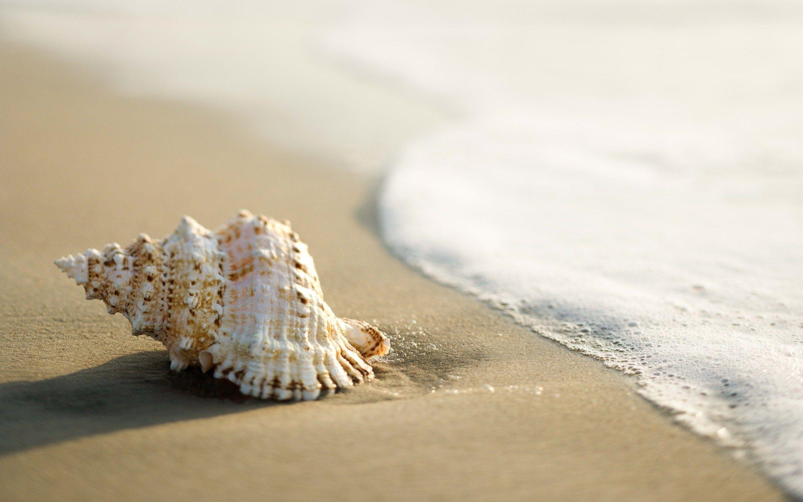 http://freehdwall.info/wall/shell-beach-wallpaper-2560x1600.jpg