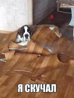 Одноклассники | Картинки с щенками, Веселые собаки, Собаки ...