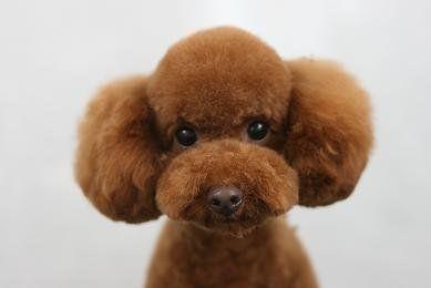 Xmas Carrots Dog Toy