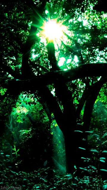 Dark Forest Nature, Dark forest, Once upon a time