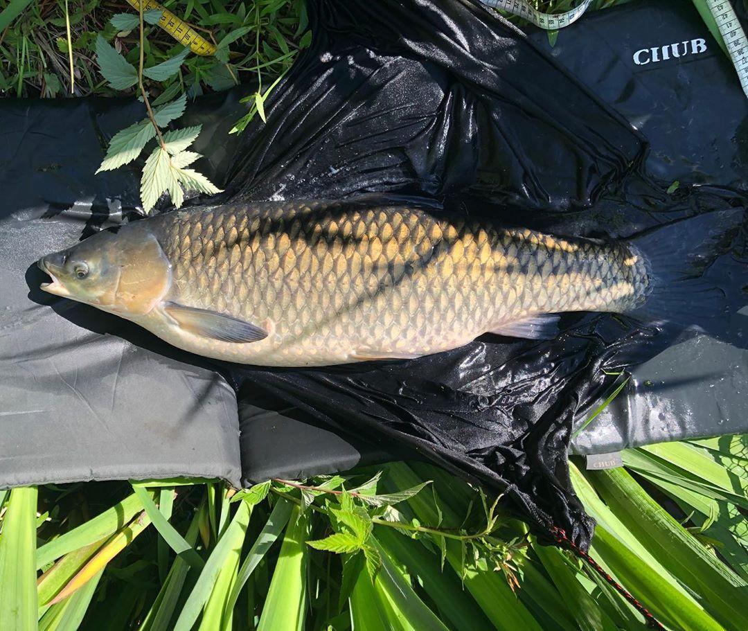 Tumblr Grass Carp Fish Summer Season