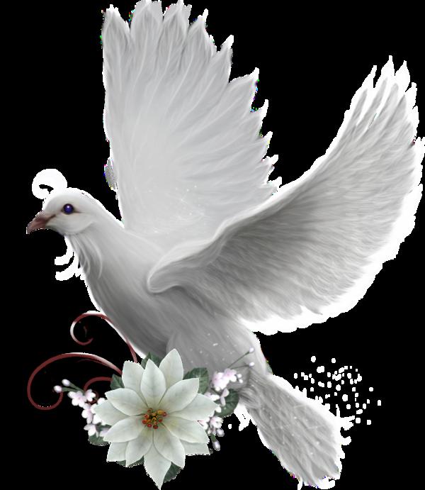colombe | Oiseaux, Idée peinture, Peinture
