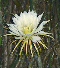 Rare Plants Qld Gardening Australia Plant Nursery