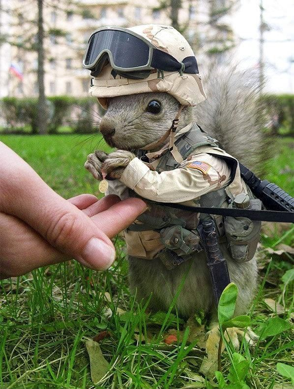 Soldier Squirrel...this will be my battle buddy\