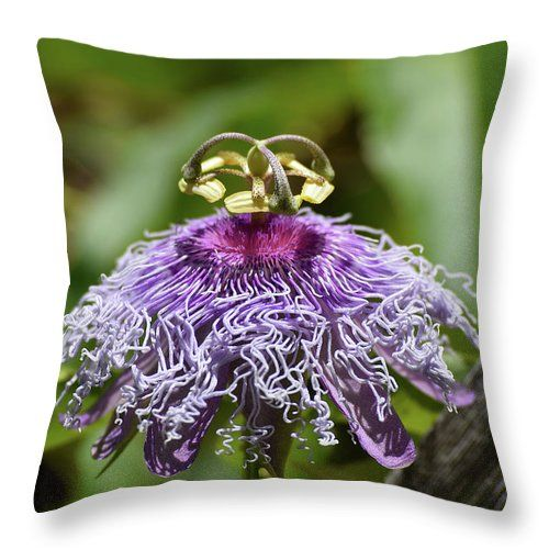 My Passion Throw Pillow For Sale By William Tasker Throw Pillows Pillows Pillow Sale
