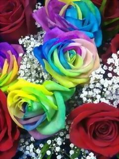 Download Free Beautiful Colors Roses Mobile Wallpaper Contributed