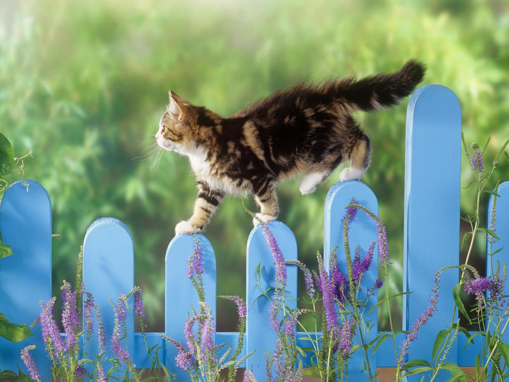 Cat repellant options for the lawn and garden My Garden