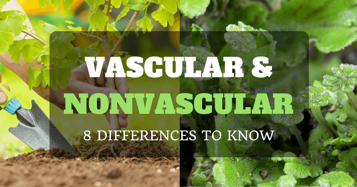 what u0026 39 s the difference between vascular and nonvascular