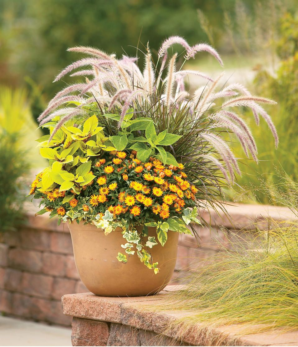 Container Recipes Search Proven Winners Container Garden Design Fall Container Gardens Ornamental Grasses