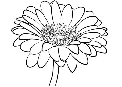 Gerbera Daisy Coloring Page Daisy Drawing Daisy Flower Drawing Flower Drawing