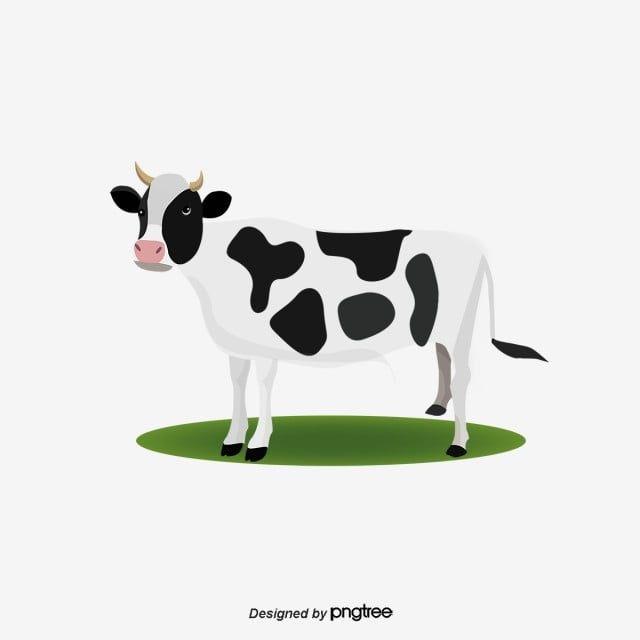 Gambar Vektor Sapi Clipart Lembu Lembu Tenusu Lembu Kartun Png Dan Psd Untuk Muat Turun Percuma Cow Clipart Cow Vector Cartoon Cow