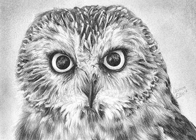 In This Post We Have Included 50 Stunning Pencil Bird Drawings For Your Inspiration. Description ...