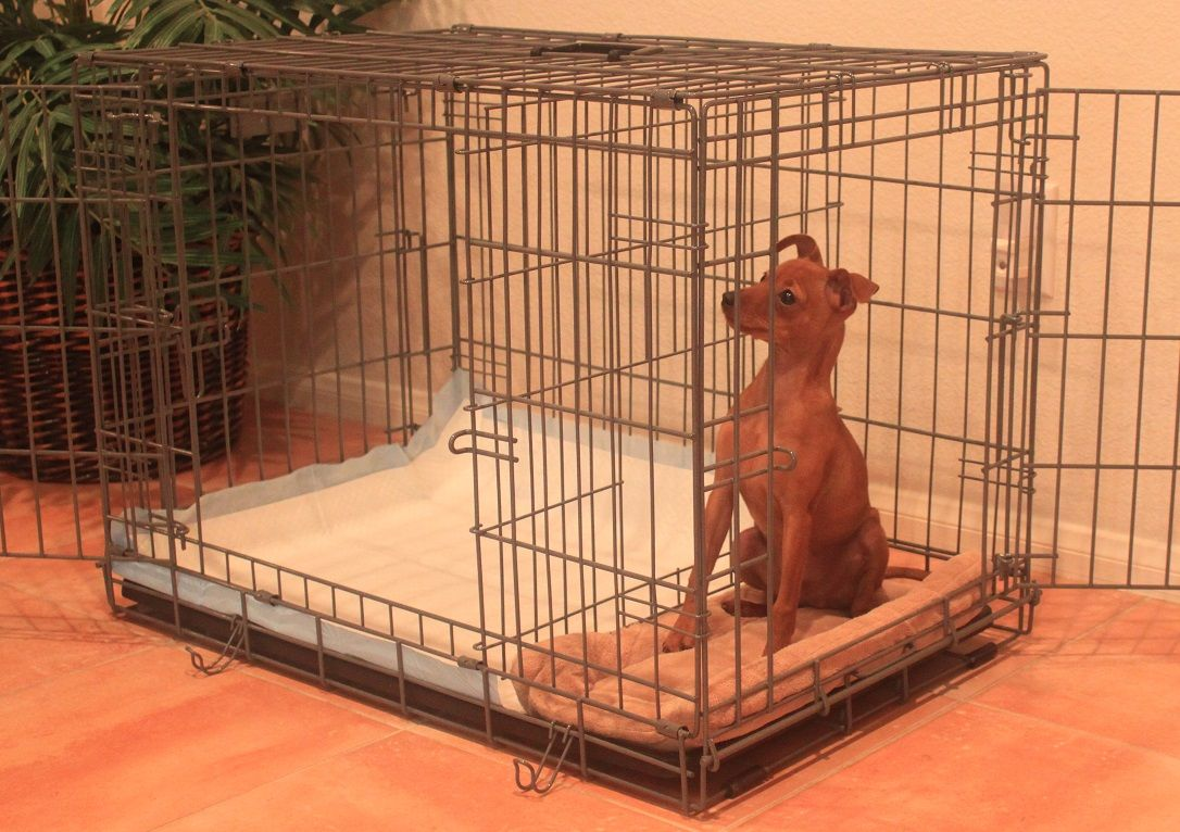 dogs peeing in crate housetraining Mega Rendering