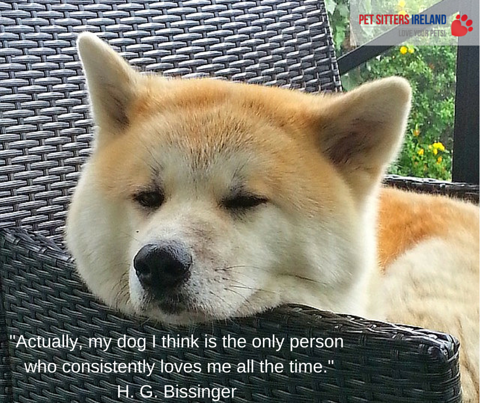 From Pet Sitting To Keeping You Comfy How Our Business Is Evolving During The Lockdown Dog Coughing Dogs Akita