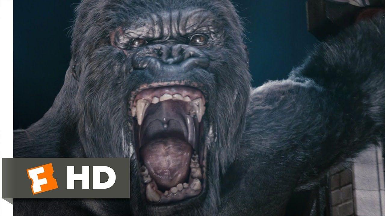 King Kong 610 Movie CLIP  Kongs Rampage 2005 HD  King Kong