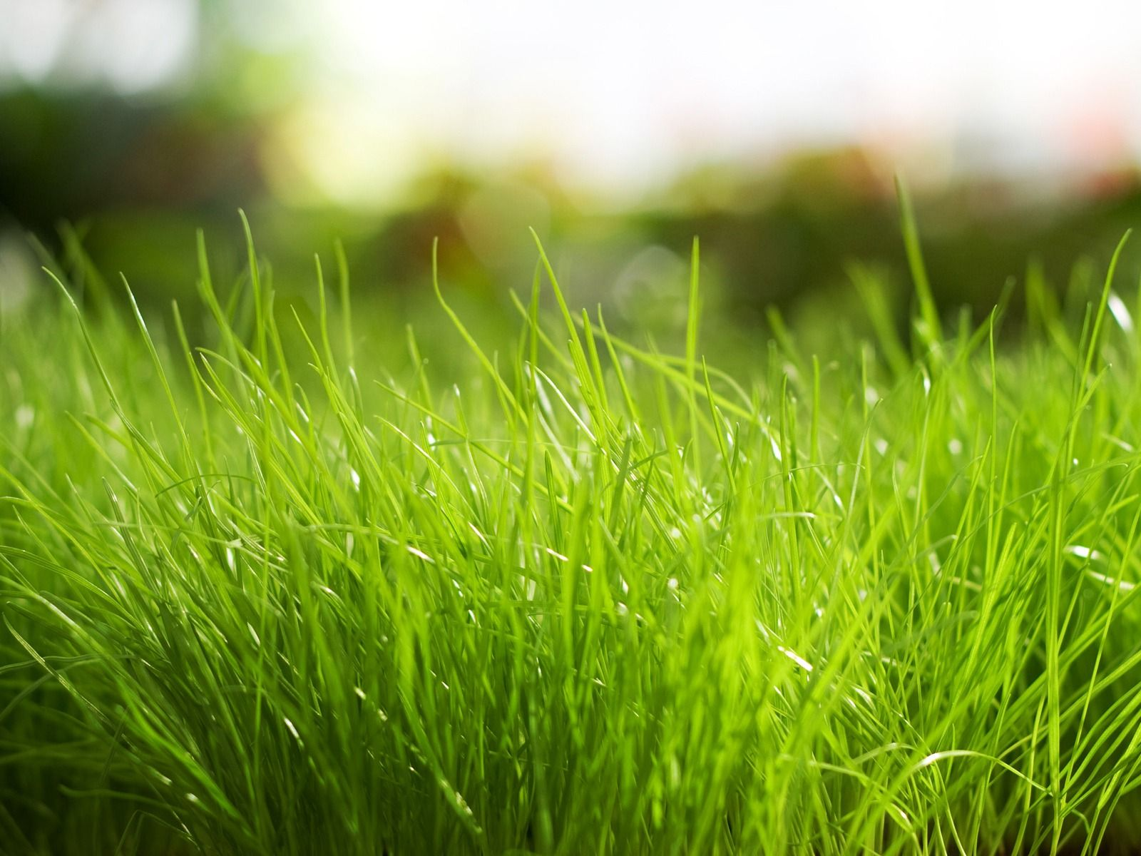 Elegant Spring Green Lawn Care